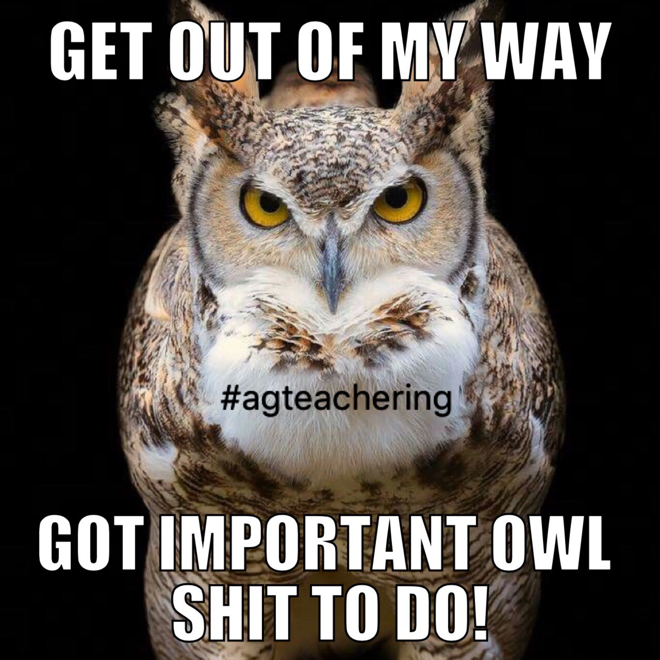 Pin by Hailey Haslam Bass on School Teaching, Owl, School
