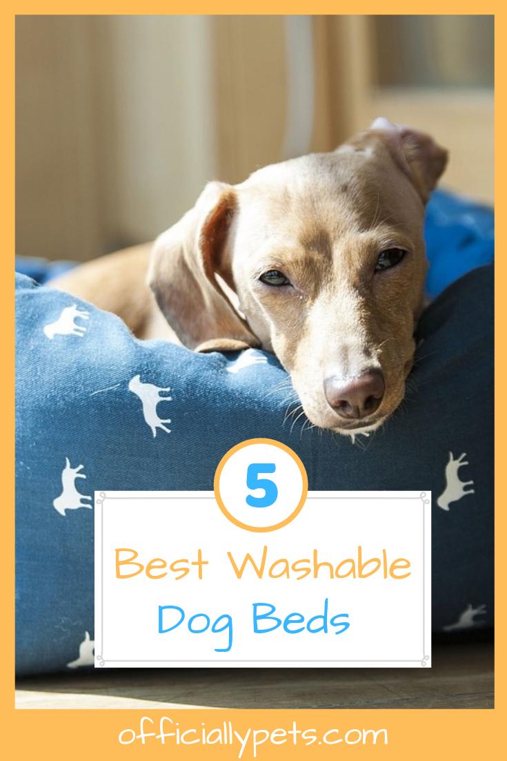 The 5 Best Washable Dog Beds Washable dog bed, Puppy dog