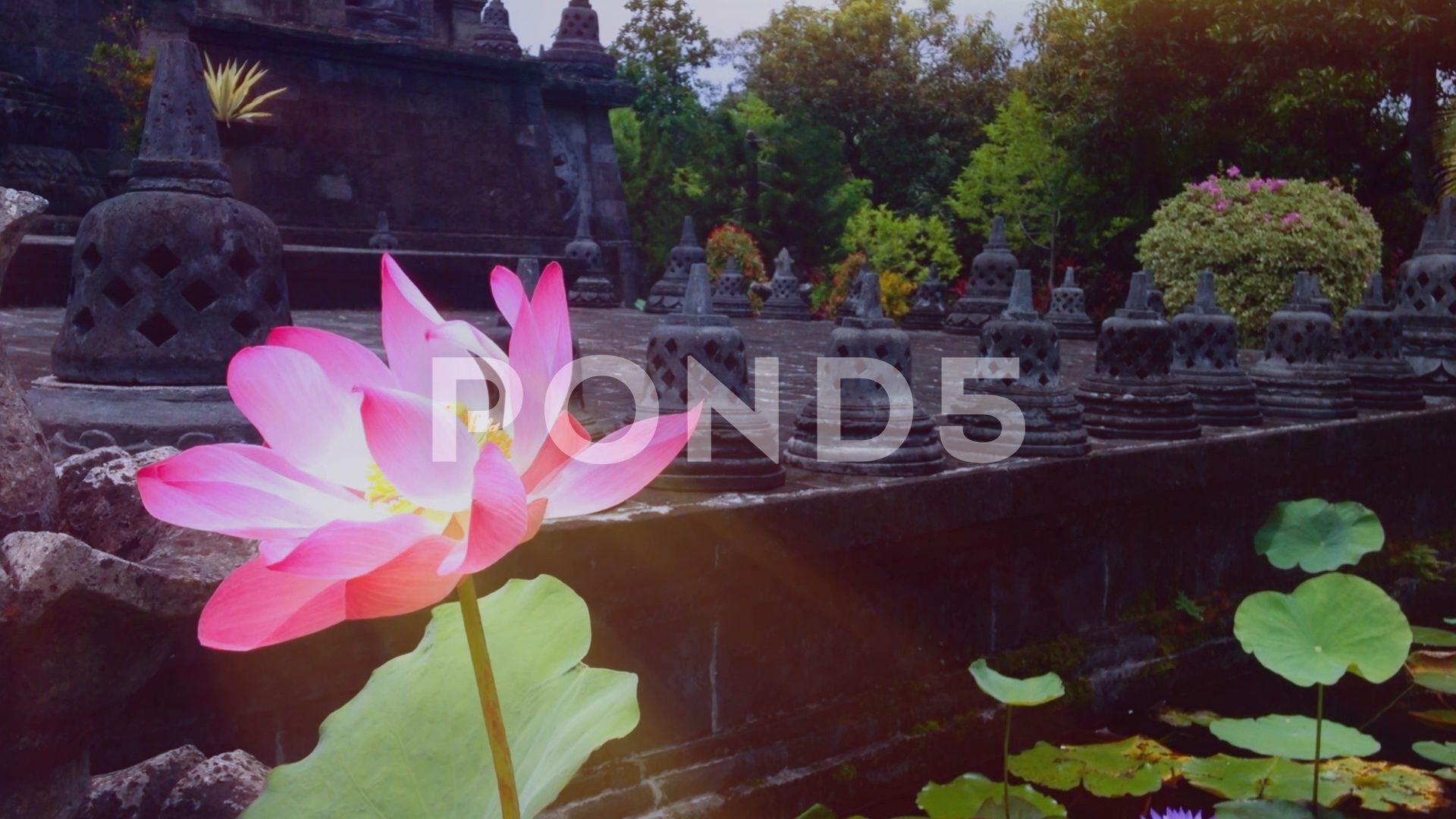 Lotus Flowers Blooming In The Pond Of Brahmavihara Arama Monastery