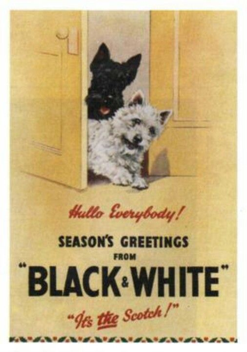 Black White Pets Mascotas Scottie Dog Black And White Scottish