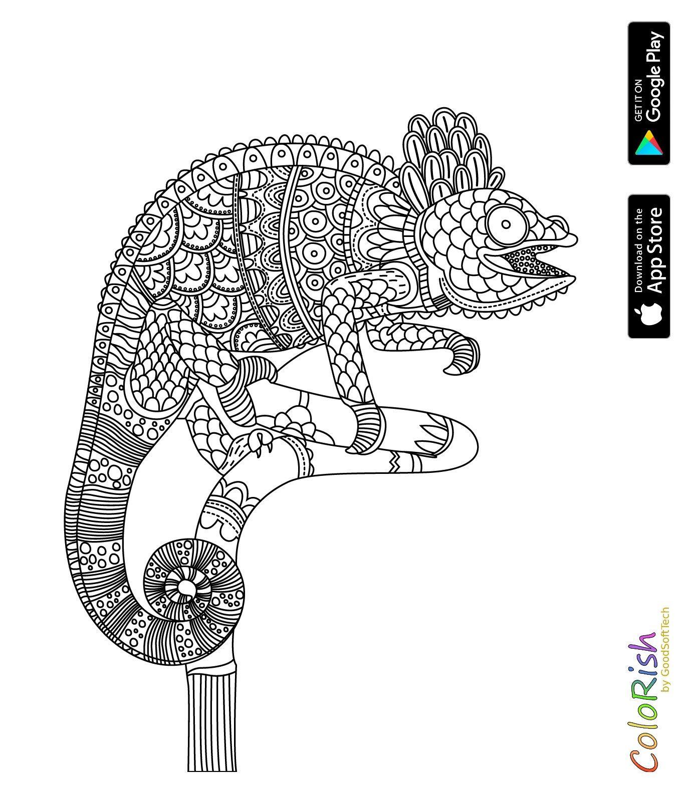 Pin by Cintia Daflon on Desenhos para colorir | Pinterest | Reptiles