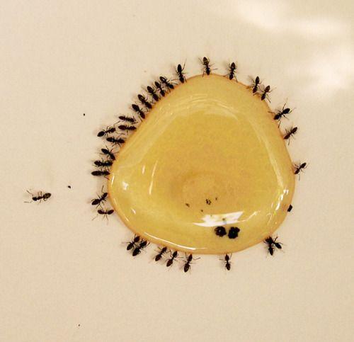 pingl par moudseghi sur maison en 2019 maison fourmis. Black Bedroom Furniture Sets. Home Design Ideas