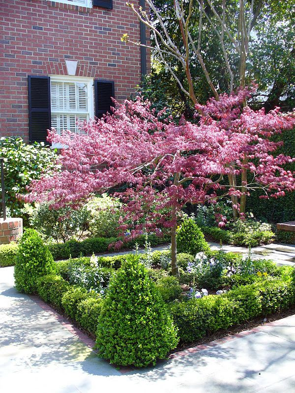 Formal gardens with boxwoods and flowering trees option for Garden design with japanese maple