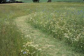 Natural grassland mowing