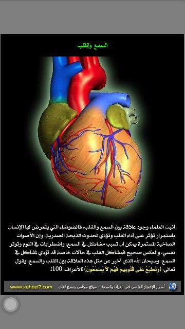 بالصور و الشرح علم وظائف أعضاء جسم الإنسان مع تشريح جسم الانسان Human Body Organs Teach Arabic Teaching