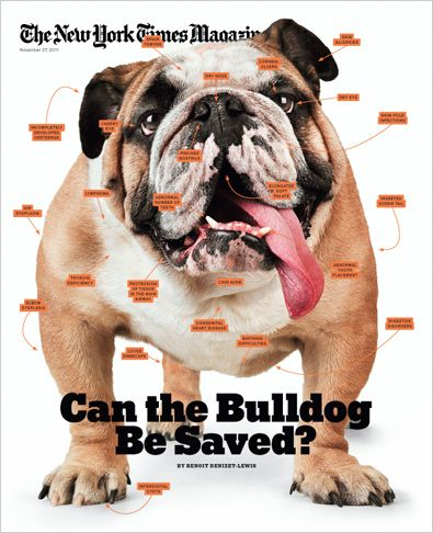 The New York Times Magazine Bulldog English Bulldog Animals