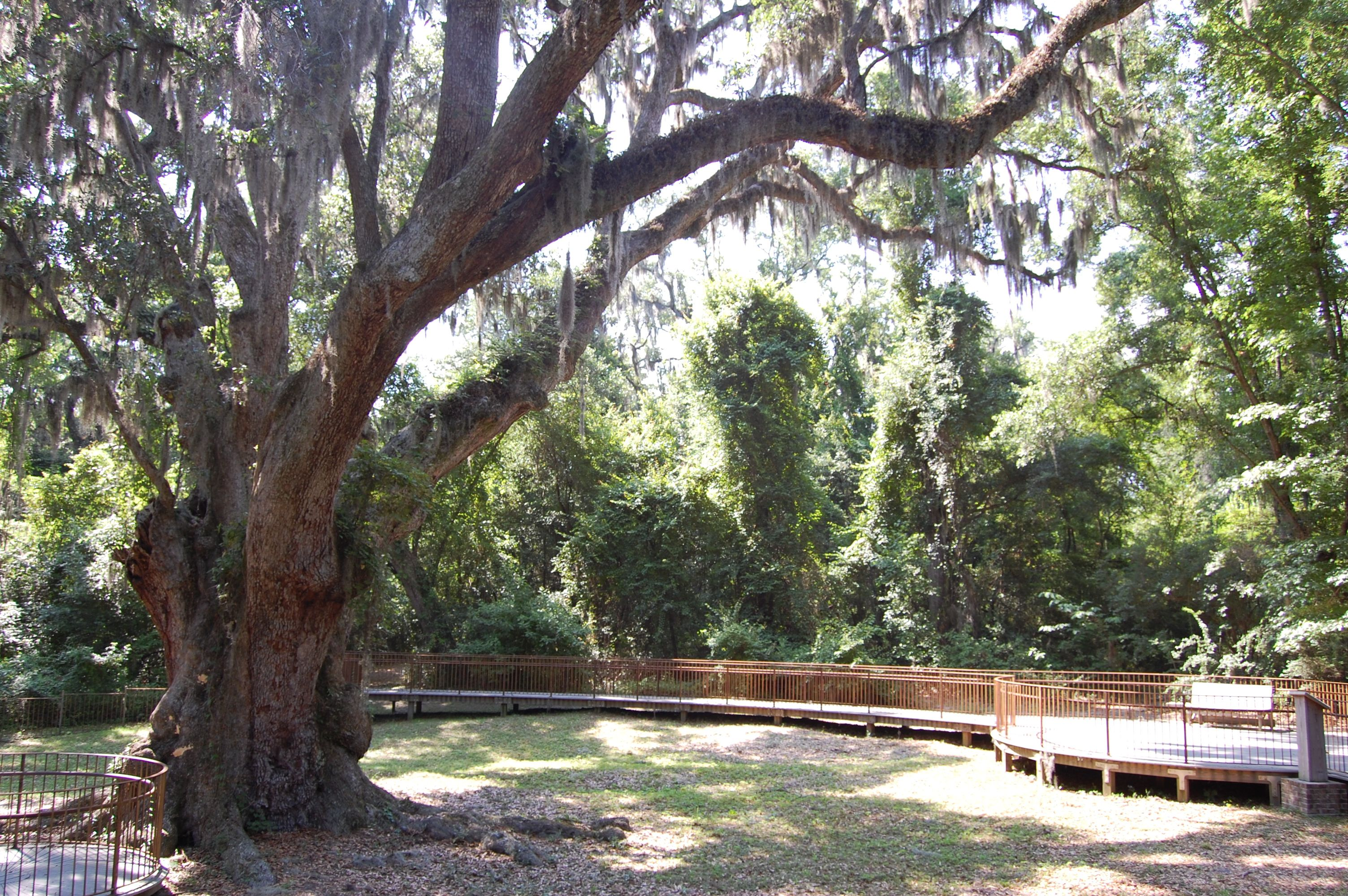 Alabama baldwin county daphne - Jackson S Oak In Daphne Alabama On Mobile Bay S Eastern Shore In Baldwin County