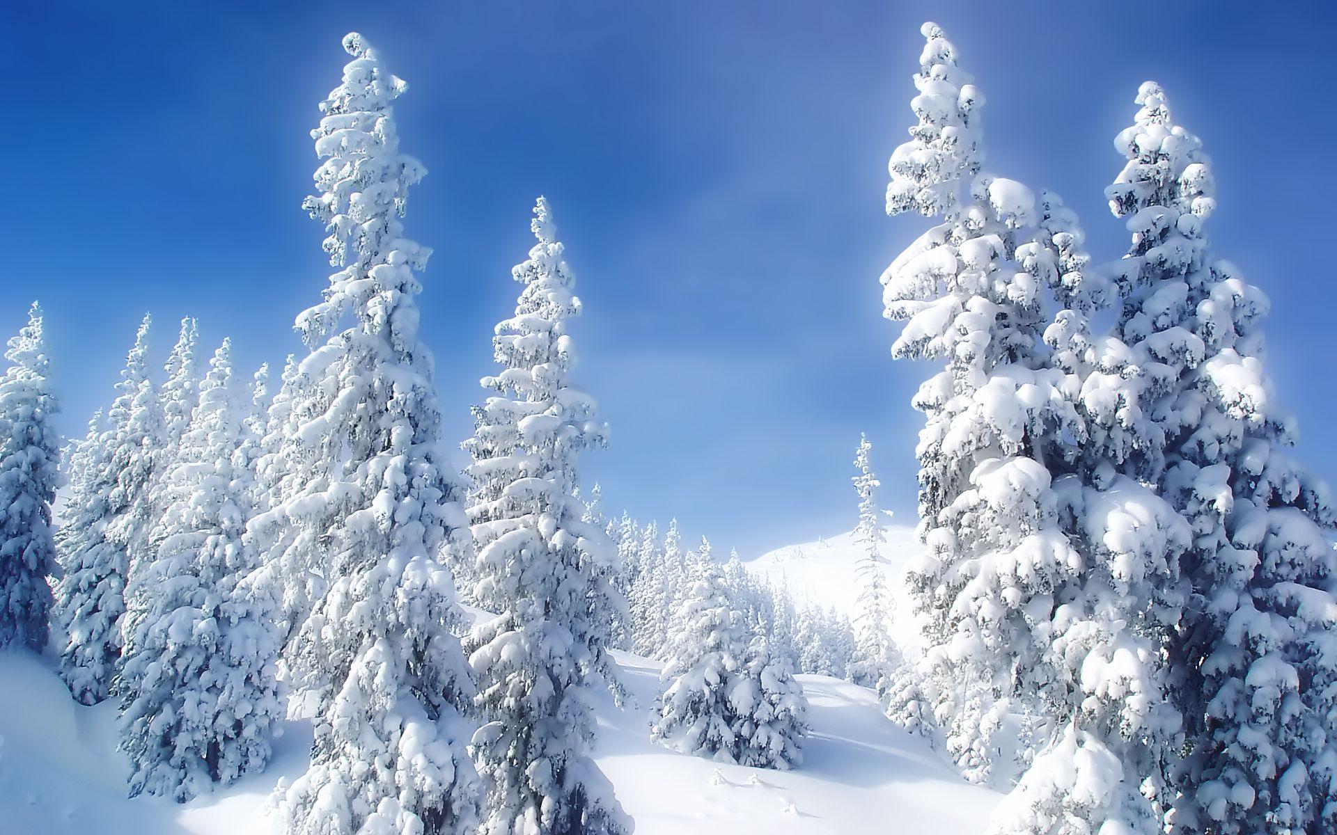 Winter Wonderland Christmas Wallpaper Hd