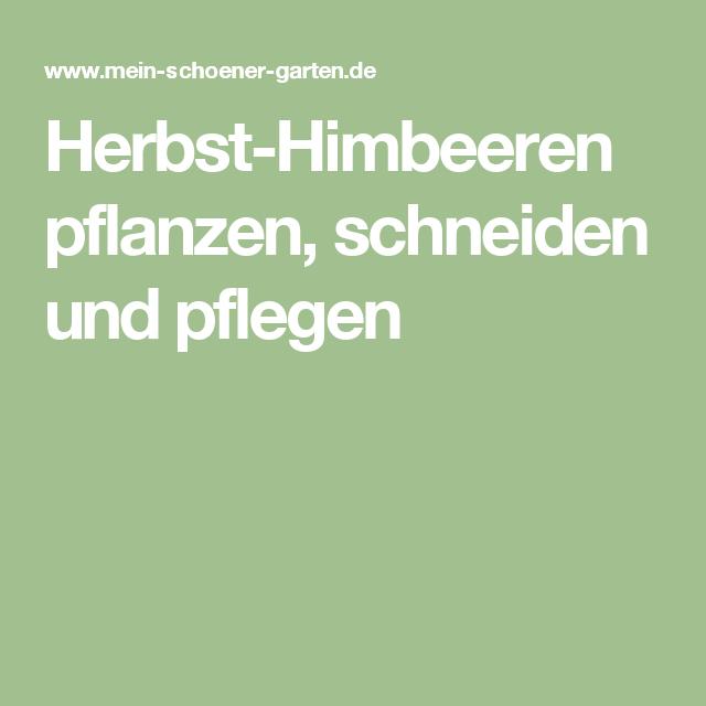 Herbst Himbeeren Pflanzen Schneiden Und Pflegen Himbeeren Pflanzen Pflanzen Anemonen Pflanzen