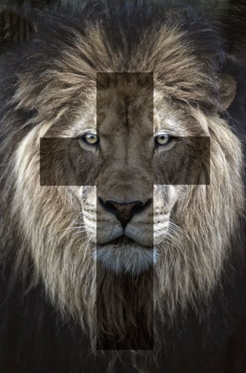 The lion of the tribe of Judah ️ | King of Kings ...
