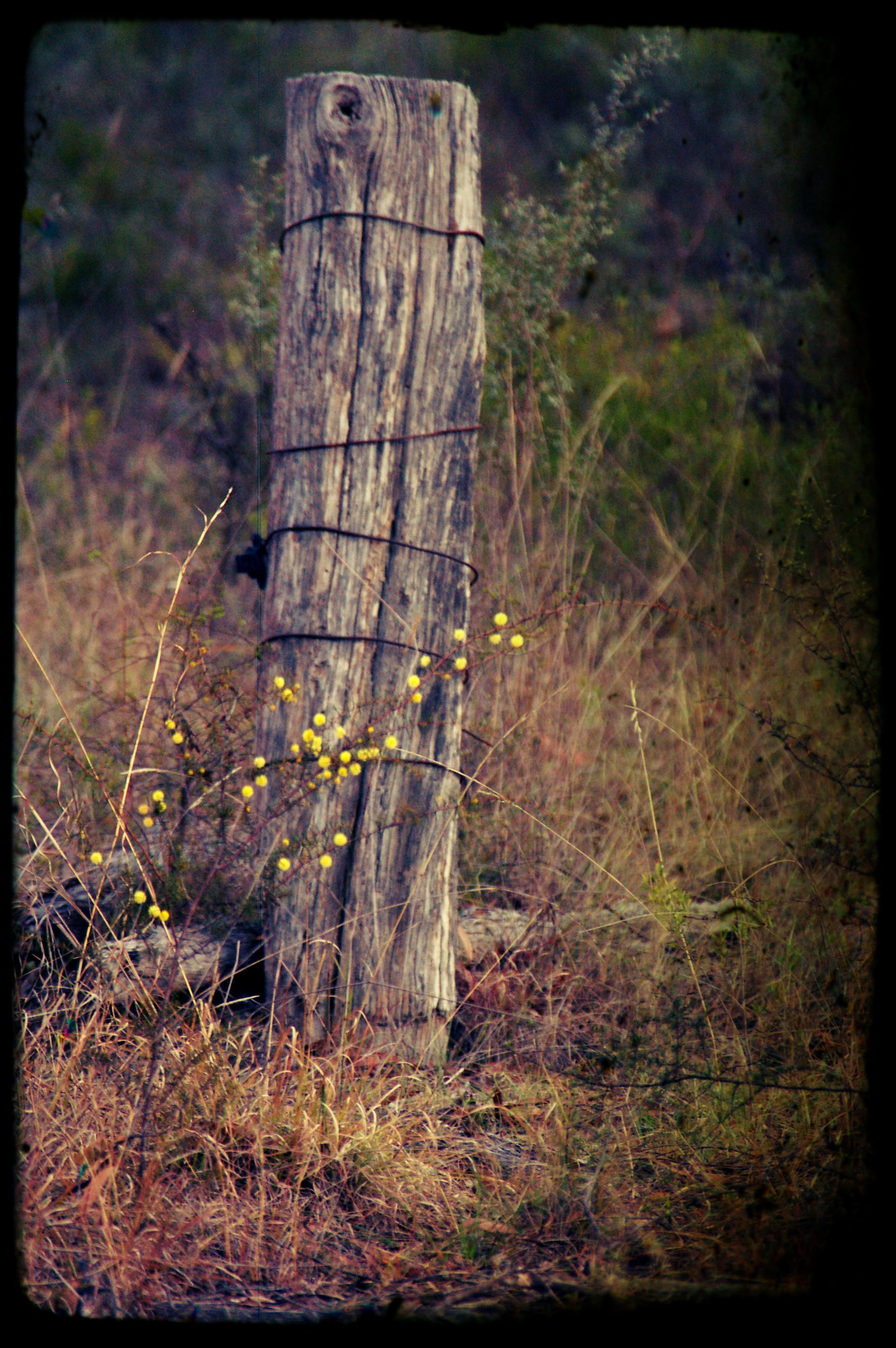 Wattle Old Fence Post Old Fences Fence Post Modern Fence