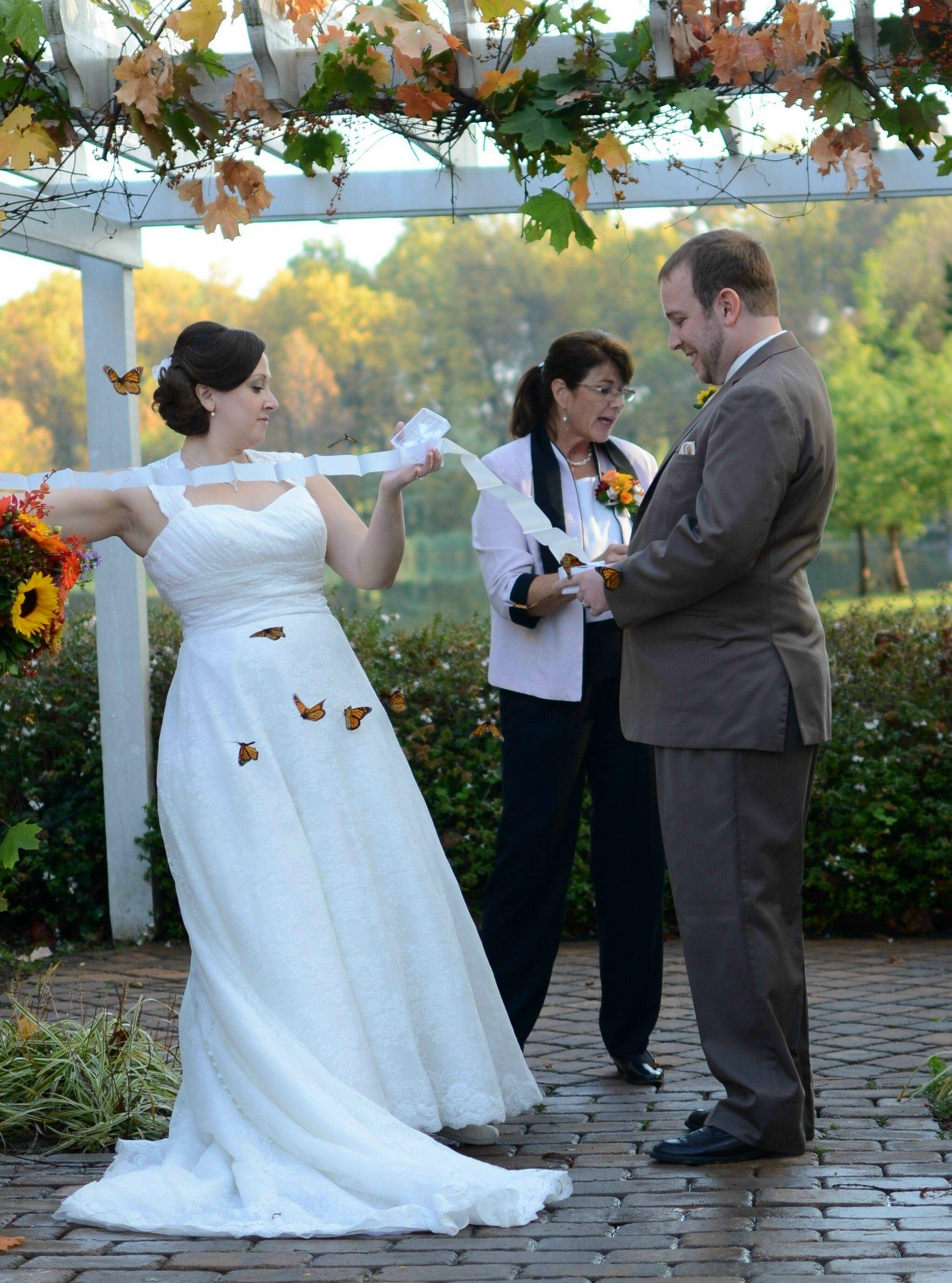 release live butterflies for your special wedding butterflyreleasesbyscom