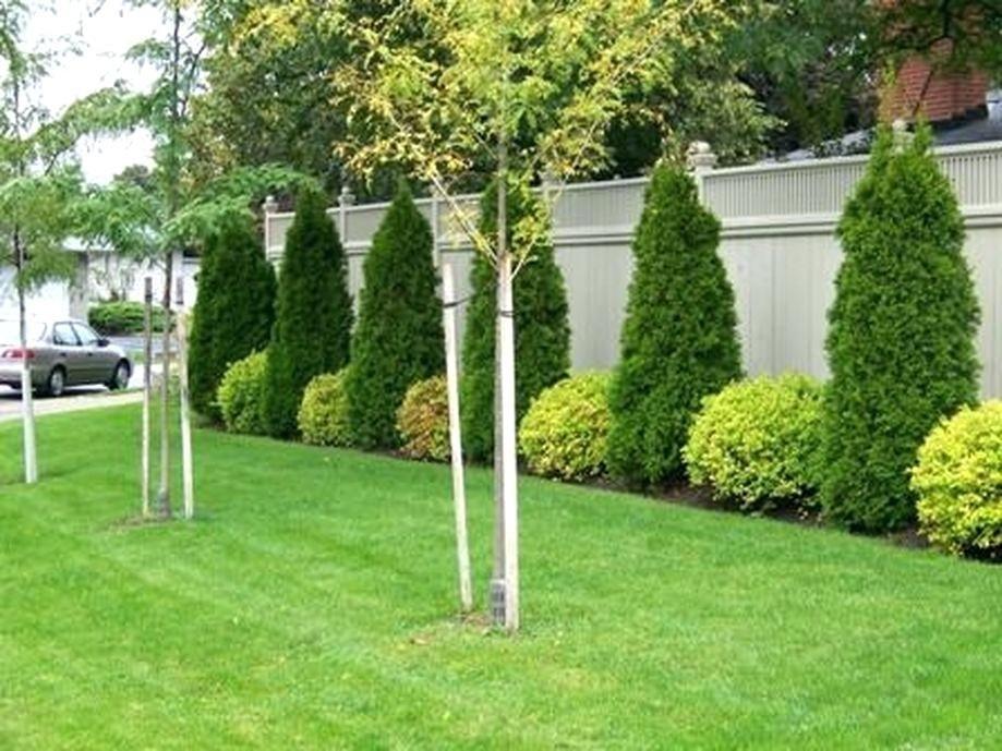 Front Yard Property Divider Idea Landscaping Along Fence Fence