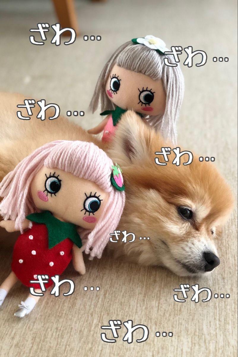 愛犬と暮らす家庭のデメリット 犬 ポメラニアン ペットショップ