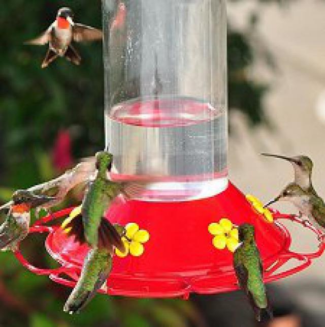 how to make hummingbird nectar youtube