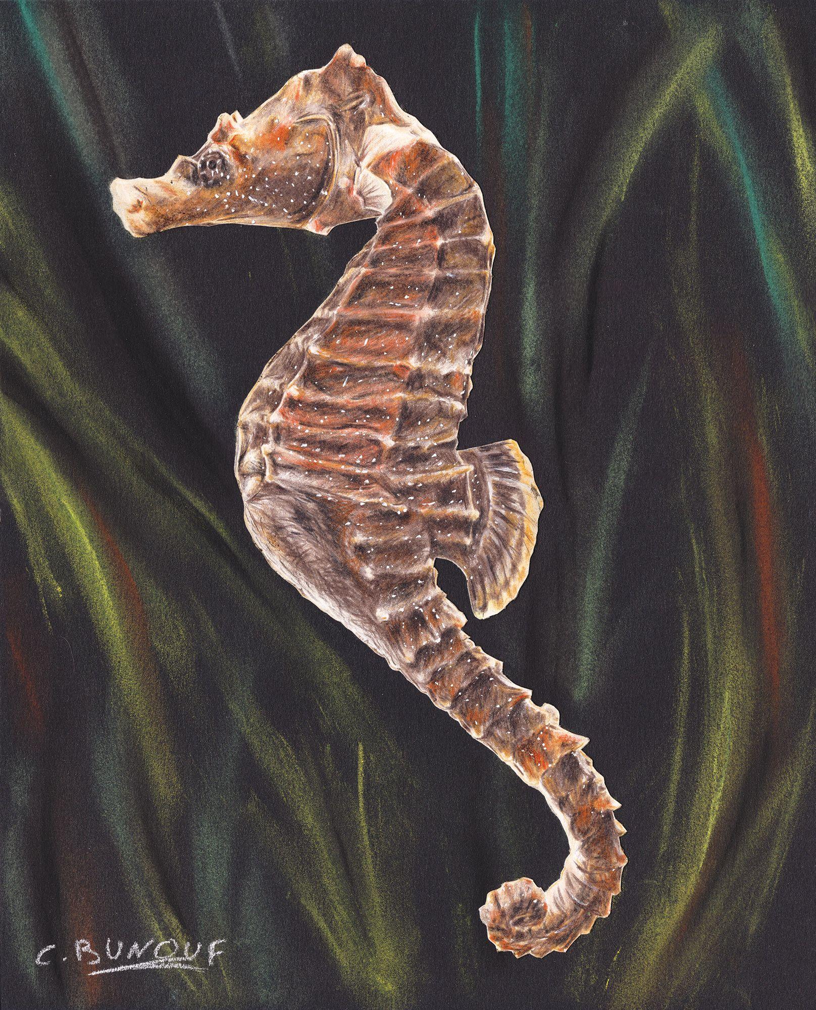 Hippocampe Animal Crayons De Couleurs Pastel Dessin