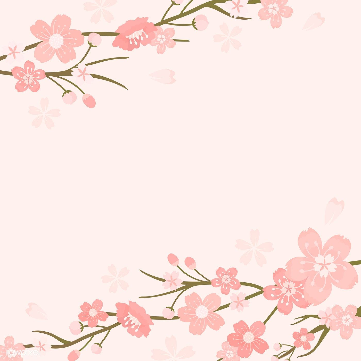 Pink Cherry Blossom Blank Background Vectot Free Image By Rawpixel Com Manotang Cherry Blossom Background Flower Background Wallpaper Cherry Blossom