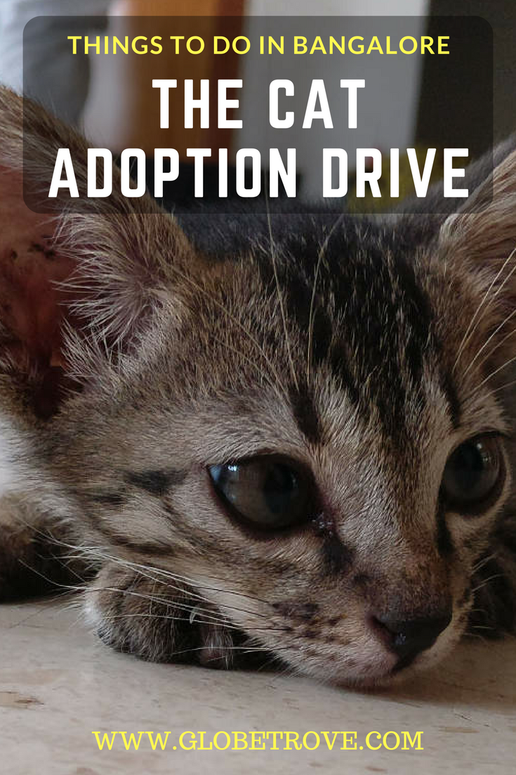 The Bangalore Cat Adoption Drive Was Conducted By The Bangalore Cat Squad In Jayanagar It Was A Big Success With 5 Cat Adoption Asia Travel India Travel Guide