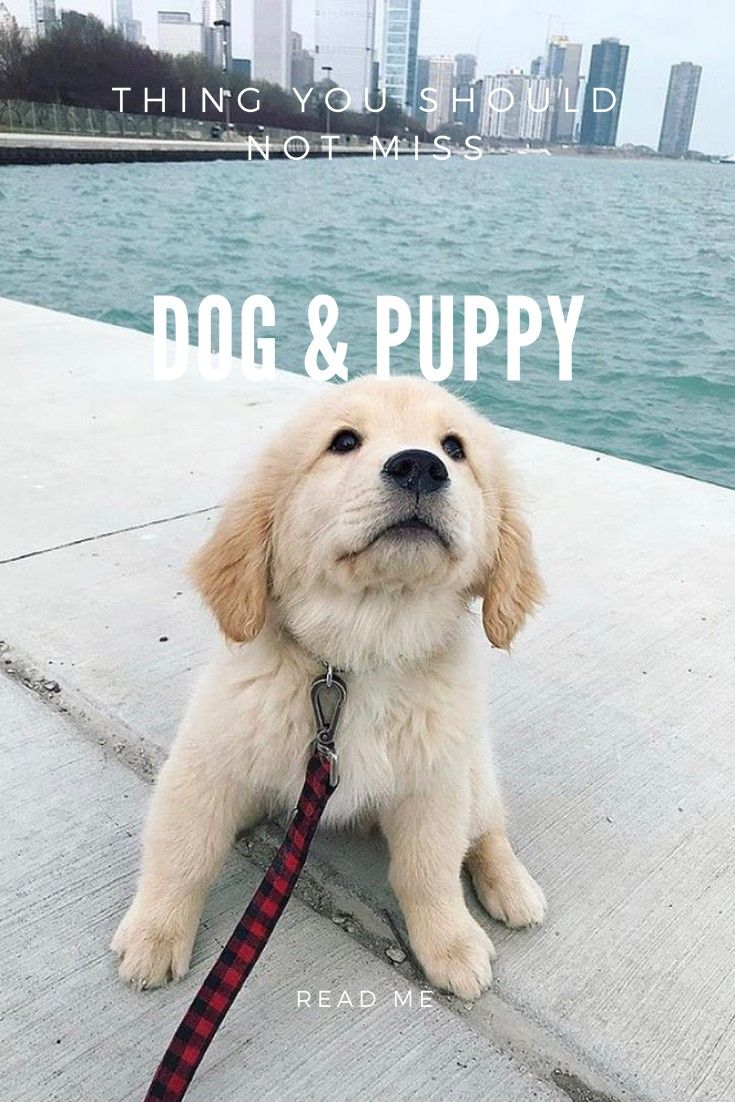 Dog training trouble with your dog try simple training techniques