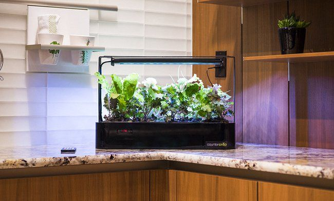 Plant Your Kitchen Garden In Your Kitchen With This 640 x 480
