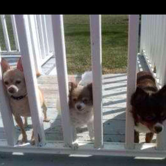 My 3 Boys :-)