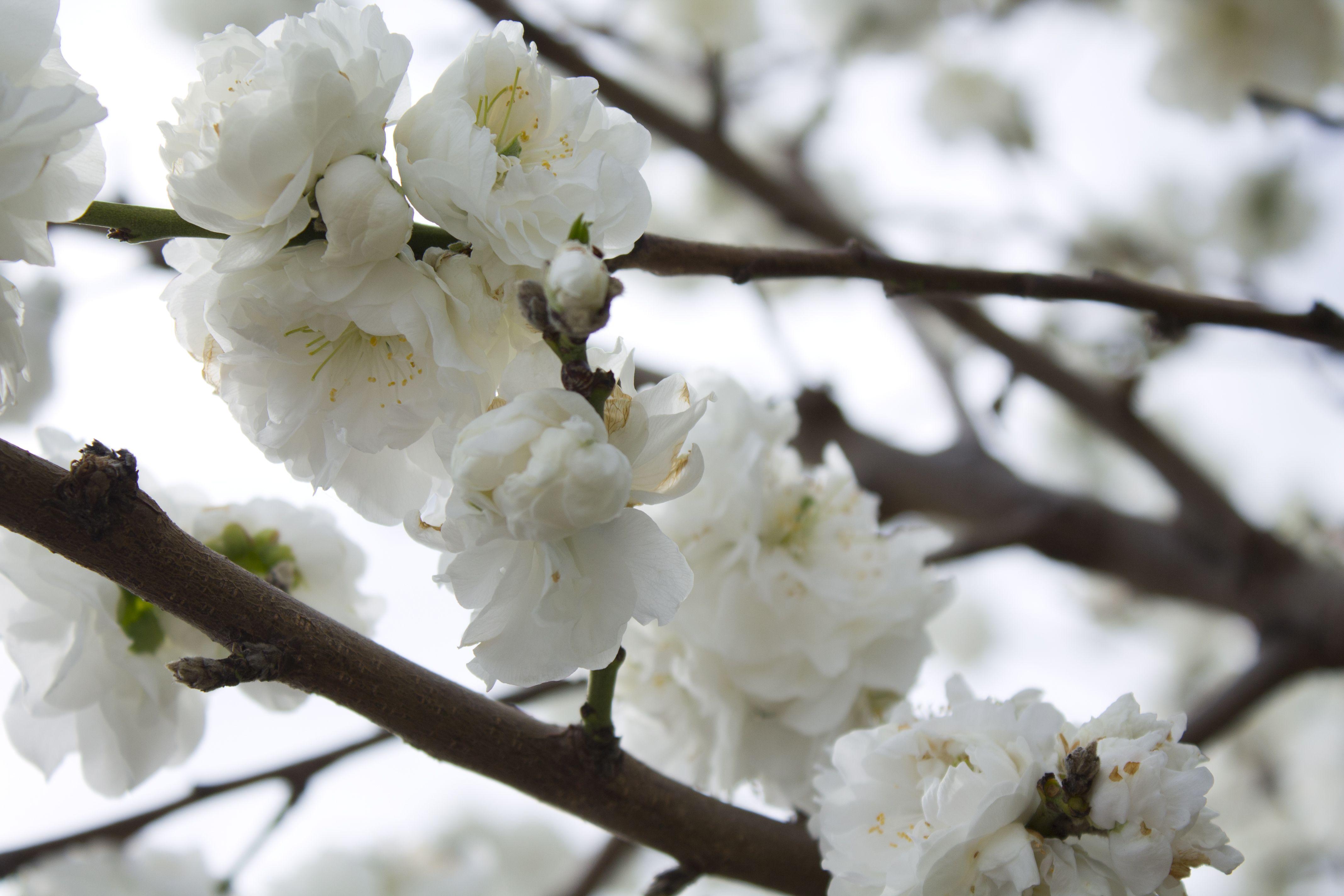 è la primavera