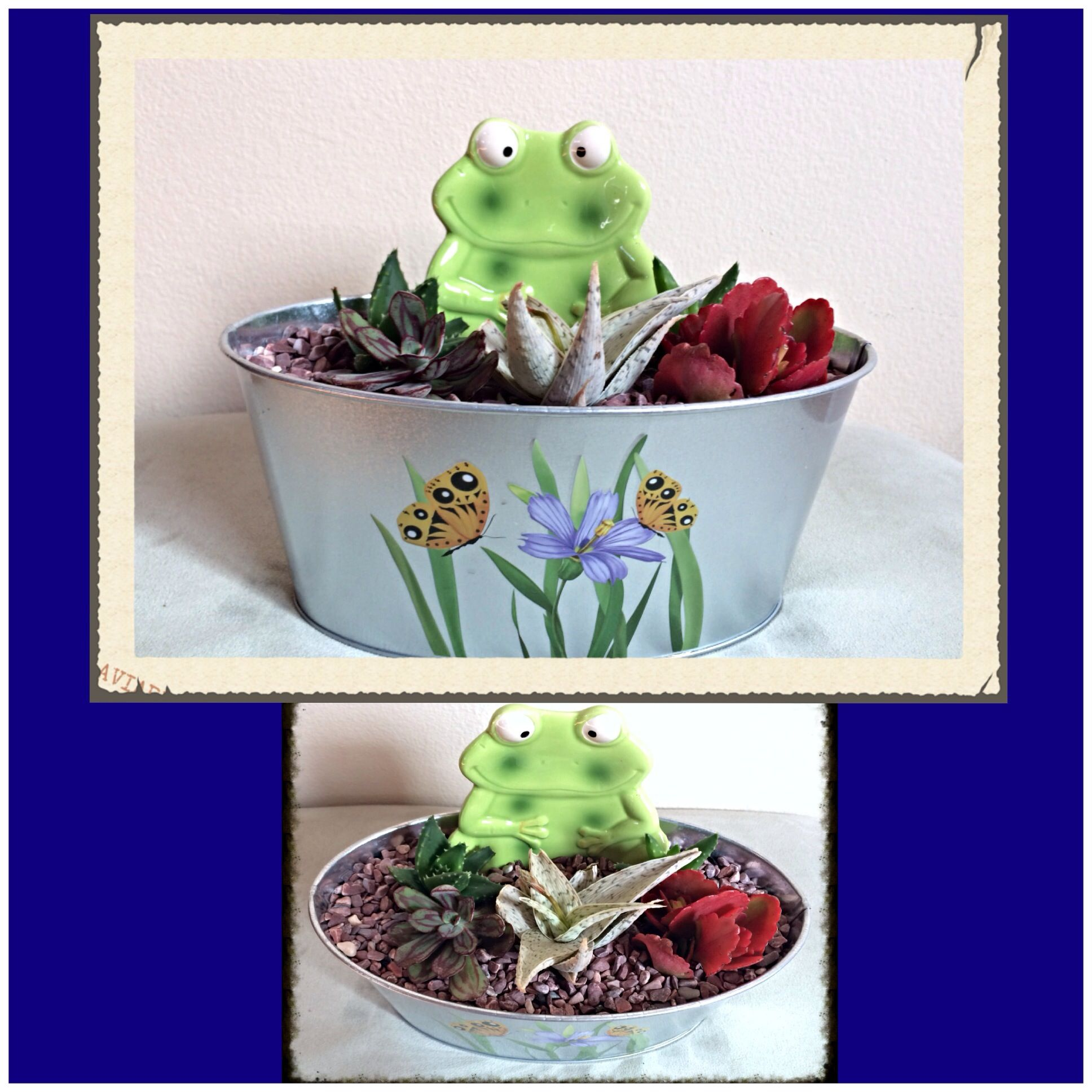 Succulents with froggy