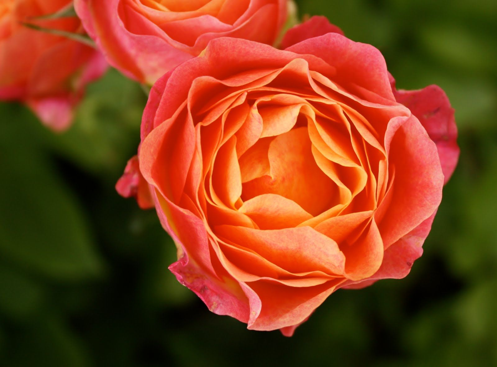 pictures of peach colored flowers | Our Color Journey ends here ...