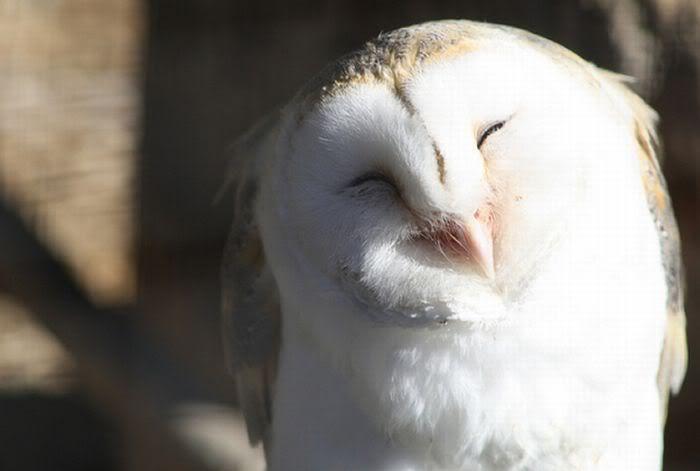 Pin De Rafael Rodrigues Em Minhas Queridas Corujas Owl