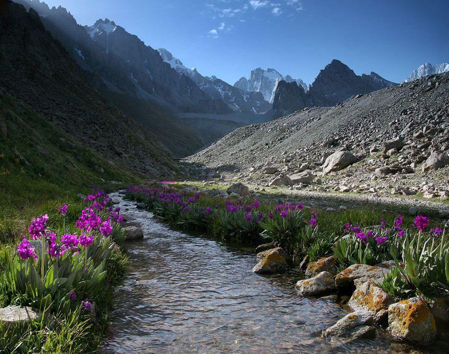 горные тюльпаны фото киргизия квартиры хотели