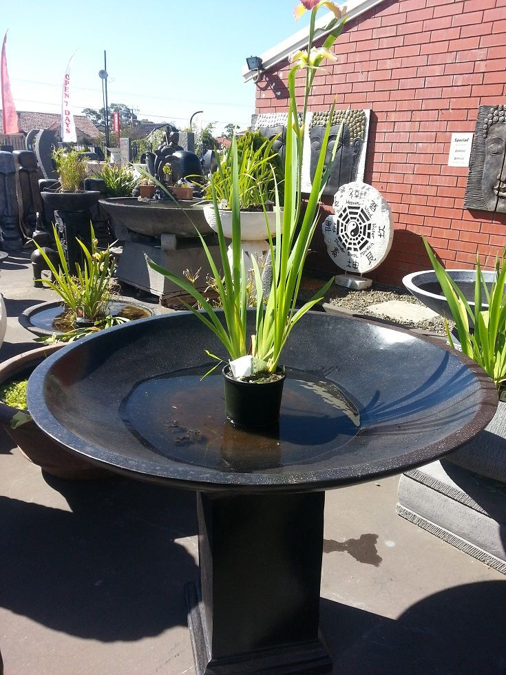 Large bowl bird bath water garden bird bath water