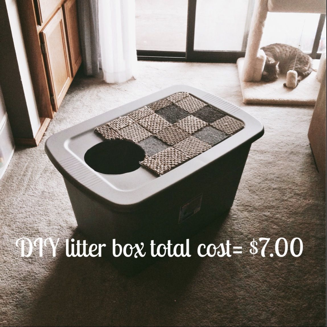 Diy Litter Box Made Simple And Affordable For Larger Cats And