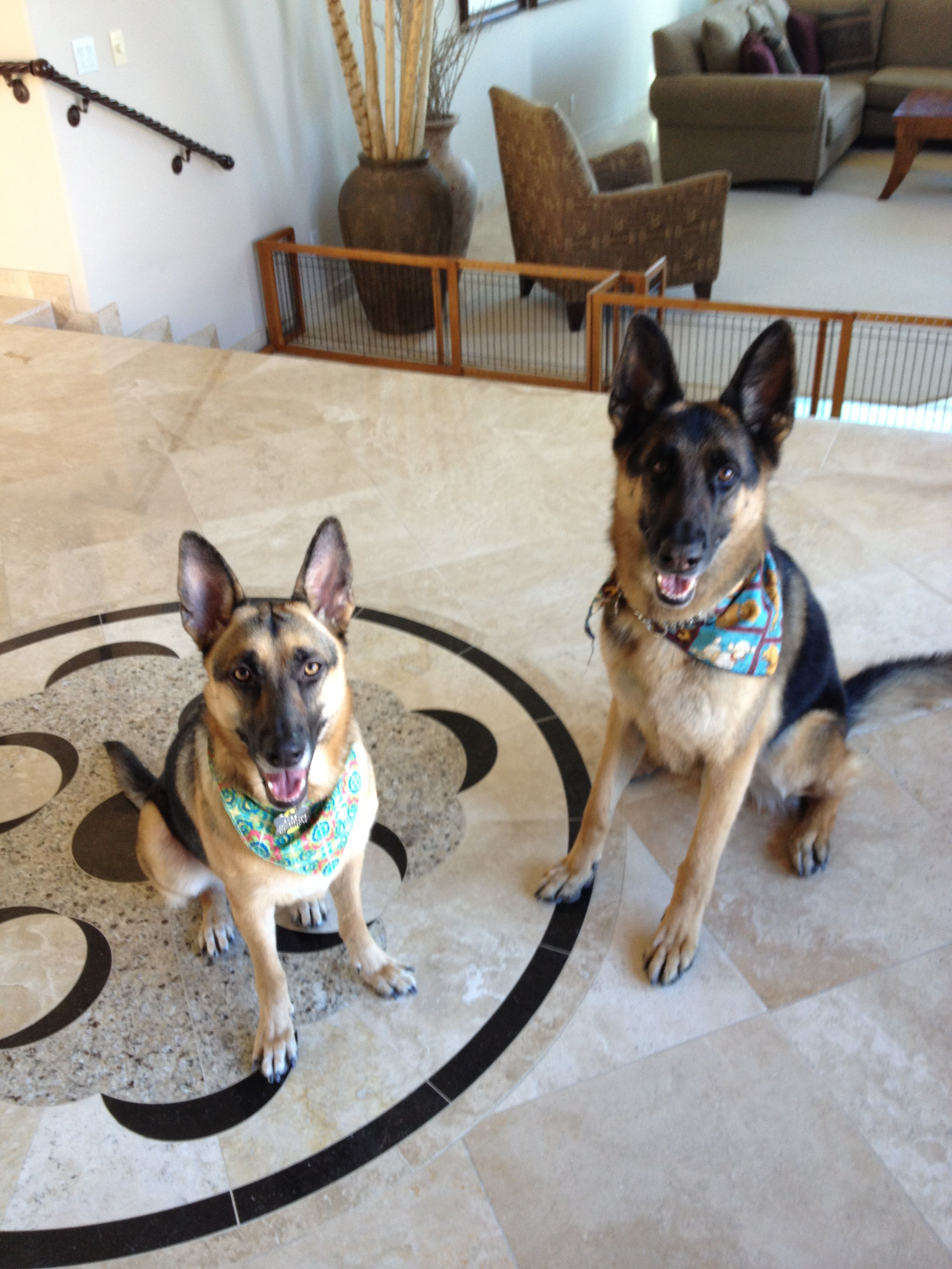 PetProofing Your Home Scottsdale Real Estate.