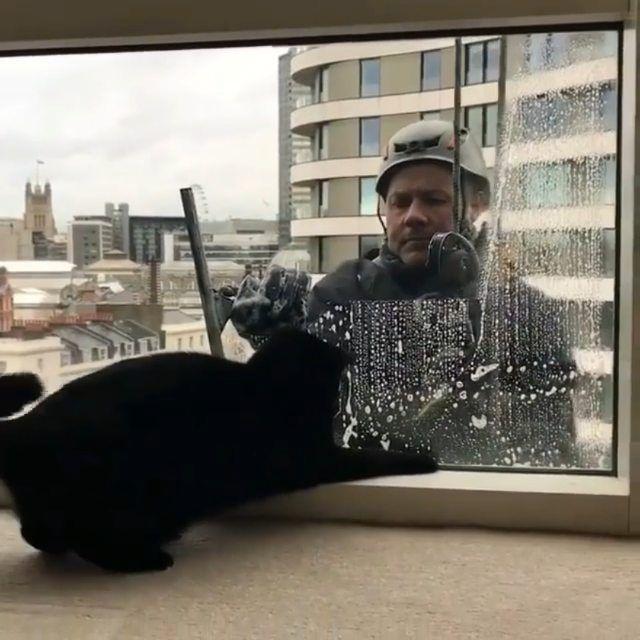 """40.2 ezer kedvelés, 563 hozzászólás – Sweet Cat Club (@sweetcatclub) Instagram-hozzászólása: """"📽 from @rina_takei 😙😙😙😙😙 ~ double tap ❤❤❤ #sweetcatclub"""""""