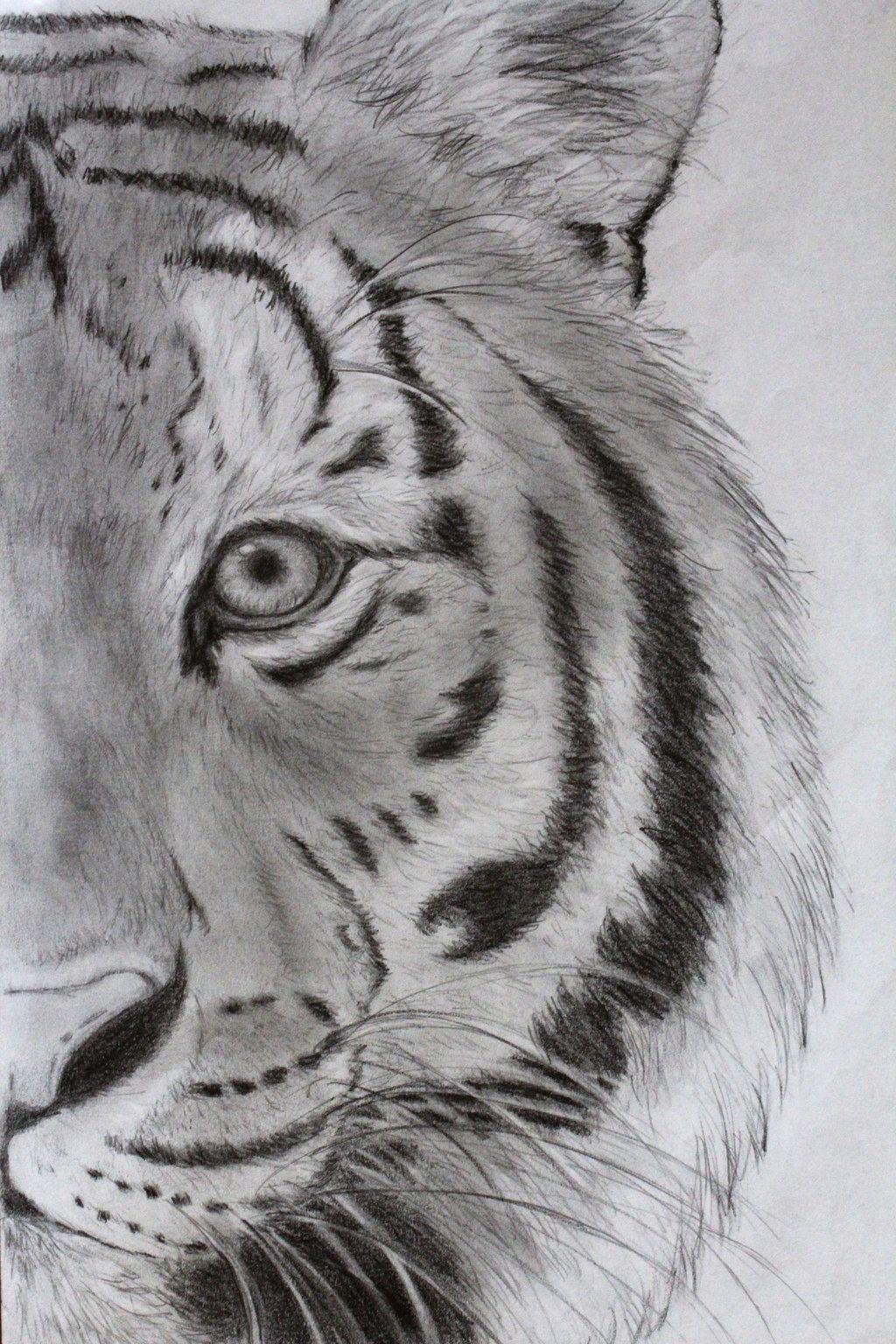 easy lion drawing tumblr wwwpixsharkcom images