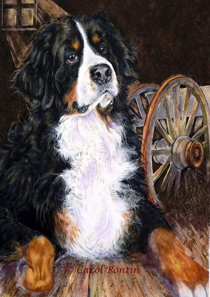 Curious Duke Limited Edition Print In 2020 Burnese Mountain Dog Dog Paintings Bernese Mountain Dog