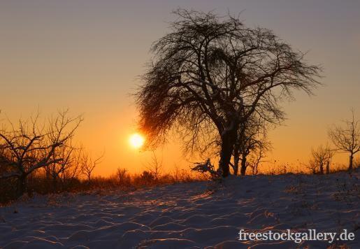 Sonnenuntergang in der Natur mit einem einsamen Baum – freestockgallery.de