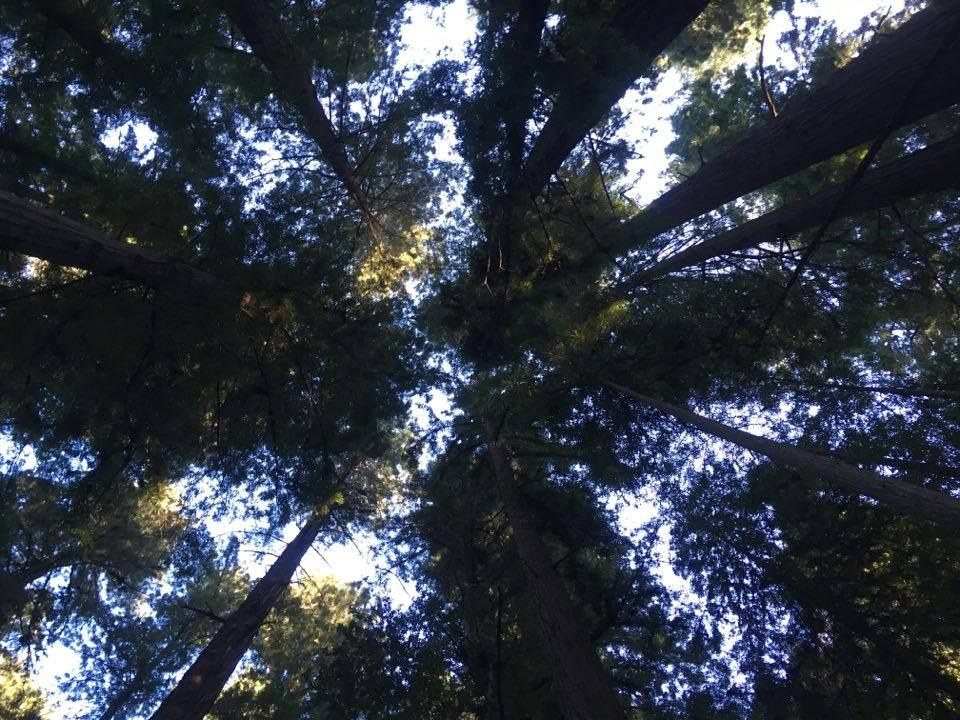 It\'s Fun Fact Friday again! Fact: Redwoods can usually survive ...