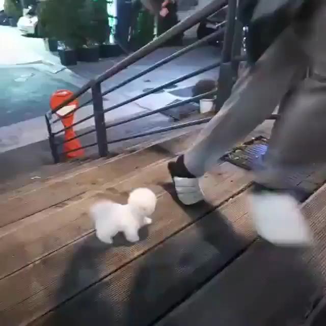 Photo of Cachorro vs escaleras