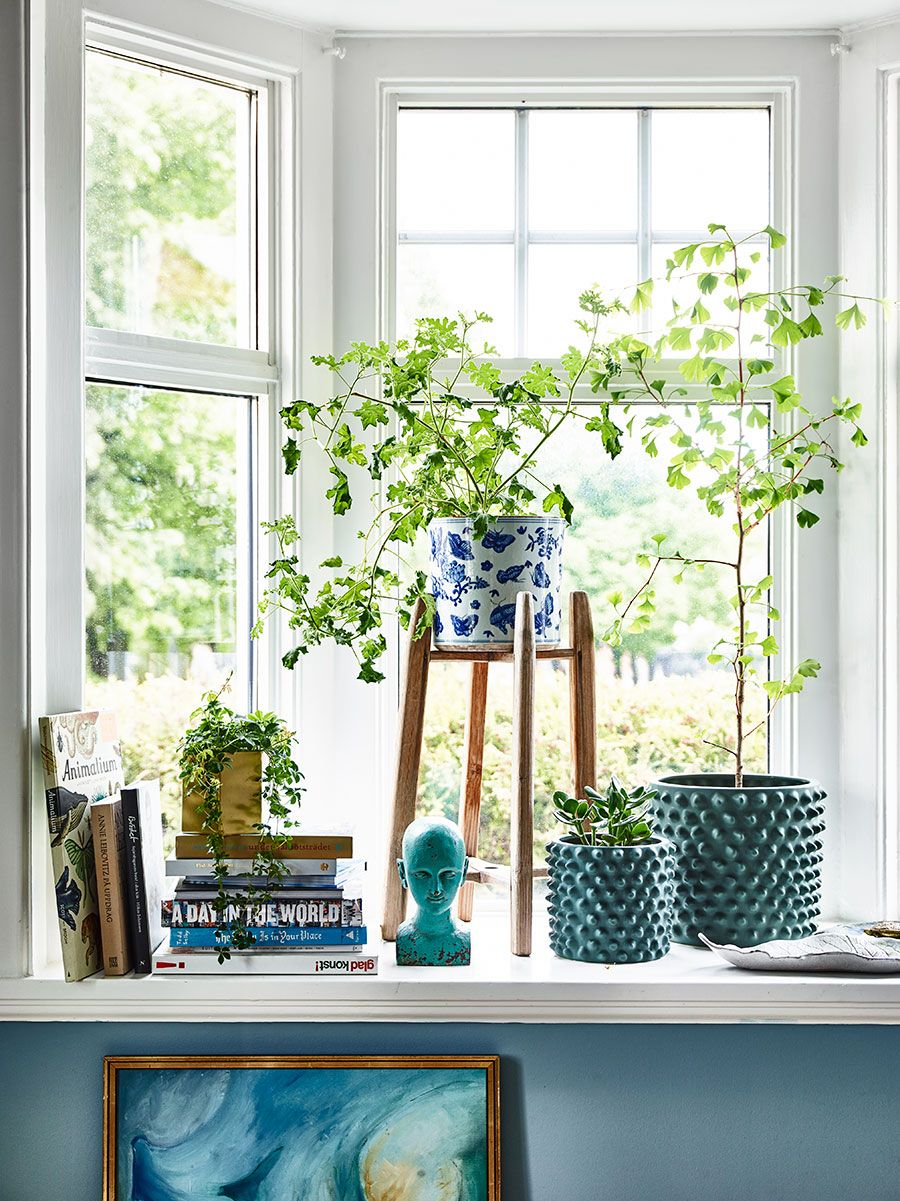 styled window corner nook with fresh plants and blues  7b889b09c2e4e