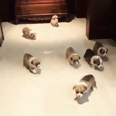 Unleashed the potatoes #cutepuppies