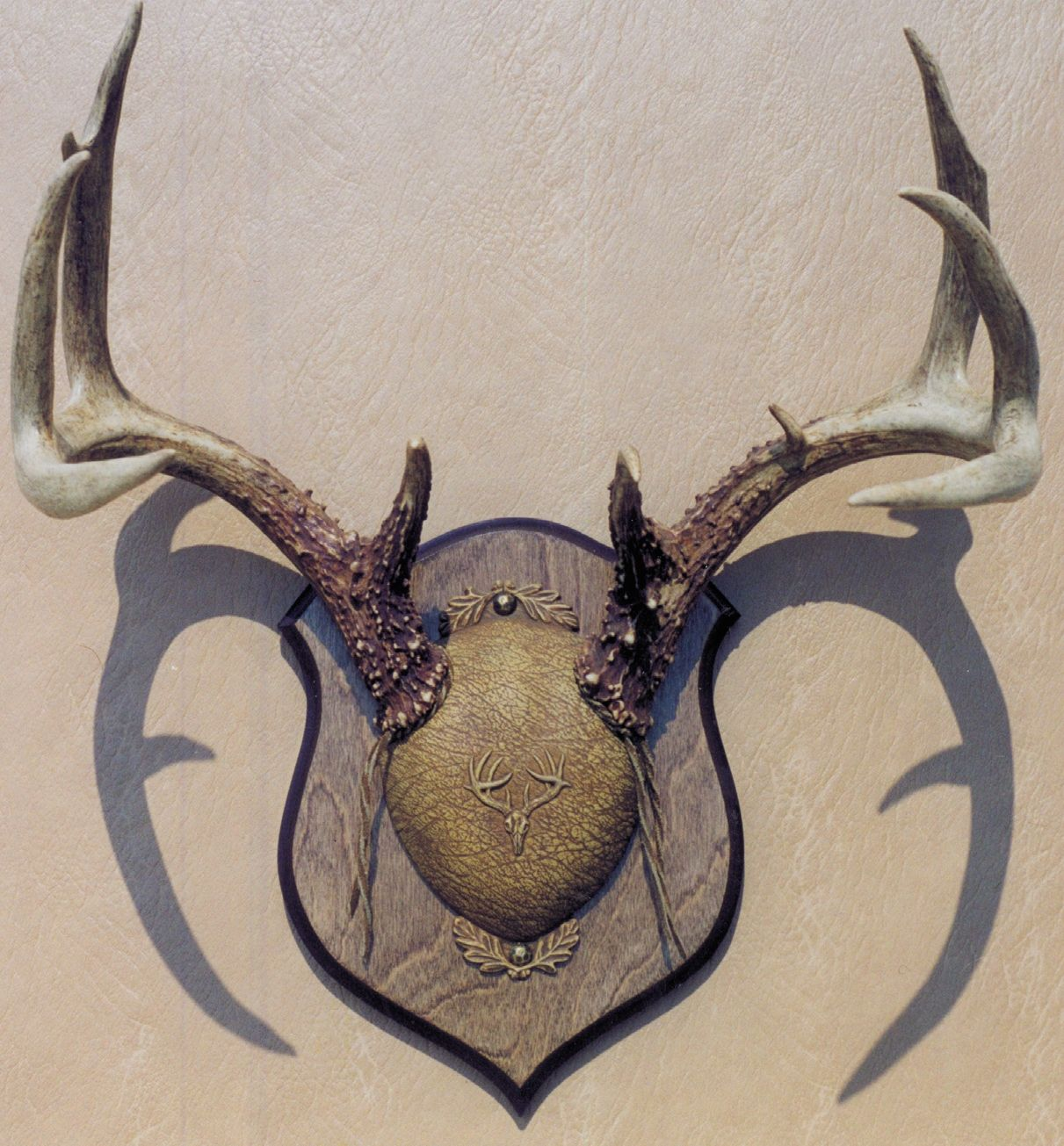Deer antler mounting kit instructions - Whitetail Scull Mount Google Search