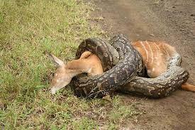 Resultado de imagen para animales salvajes