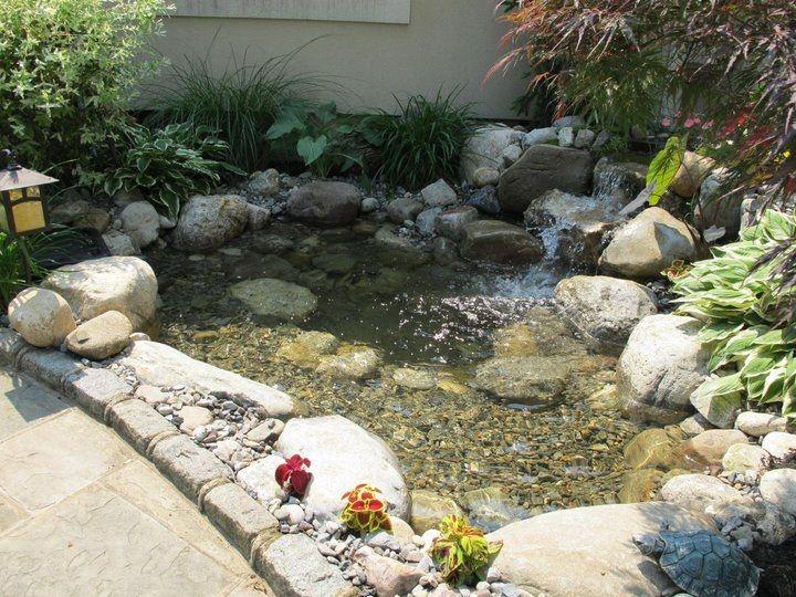 Entry level pond ecosystem pond fish pond backyard pond for Koi pond water quality levels