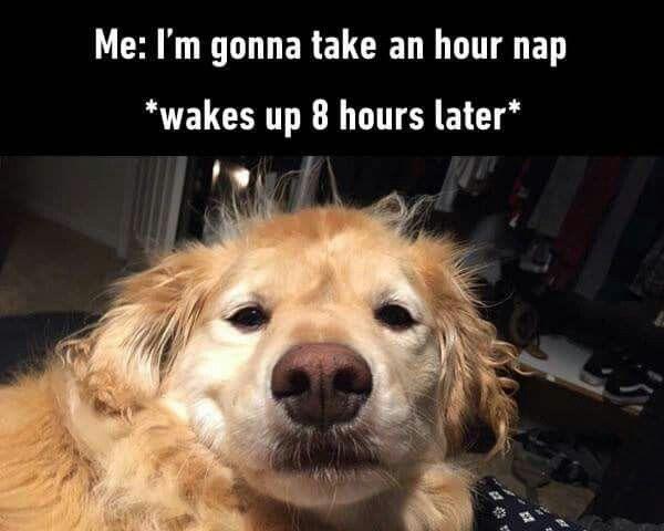 Pin by Katriina Peltomaa on My Style Funny dog memes