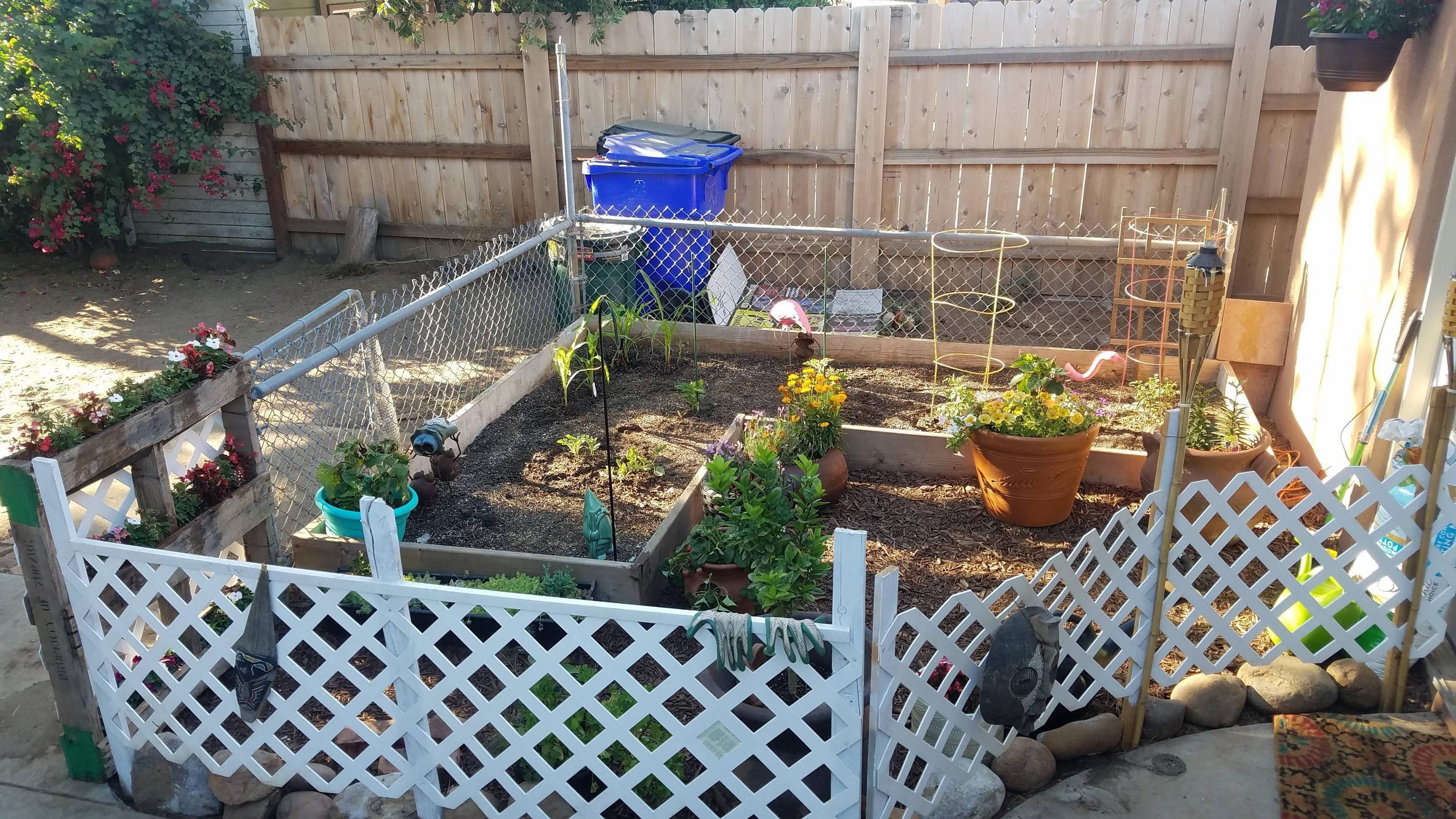 Dogproof gardening gardening garden diy home
