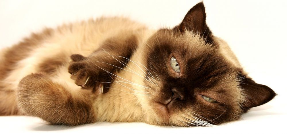 Online shopping for Pet Supplies and Pet Accessories Cat