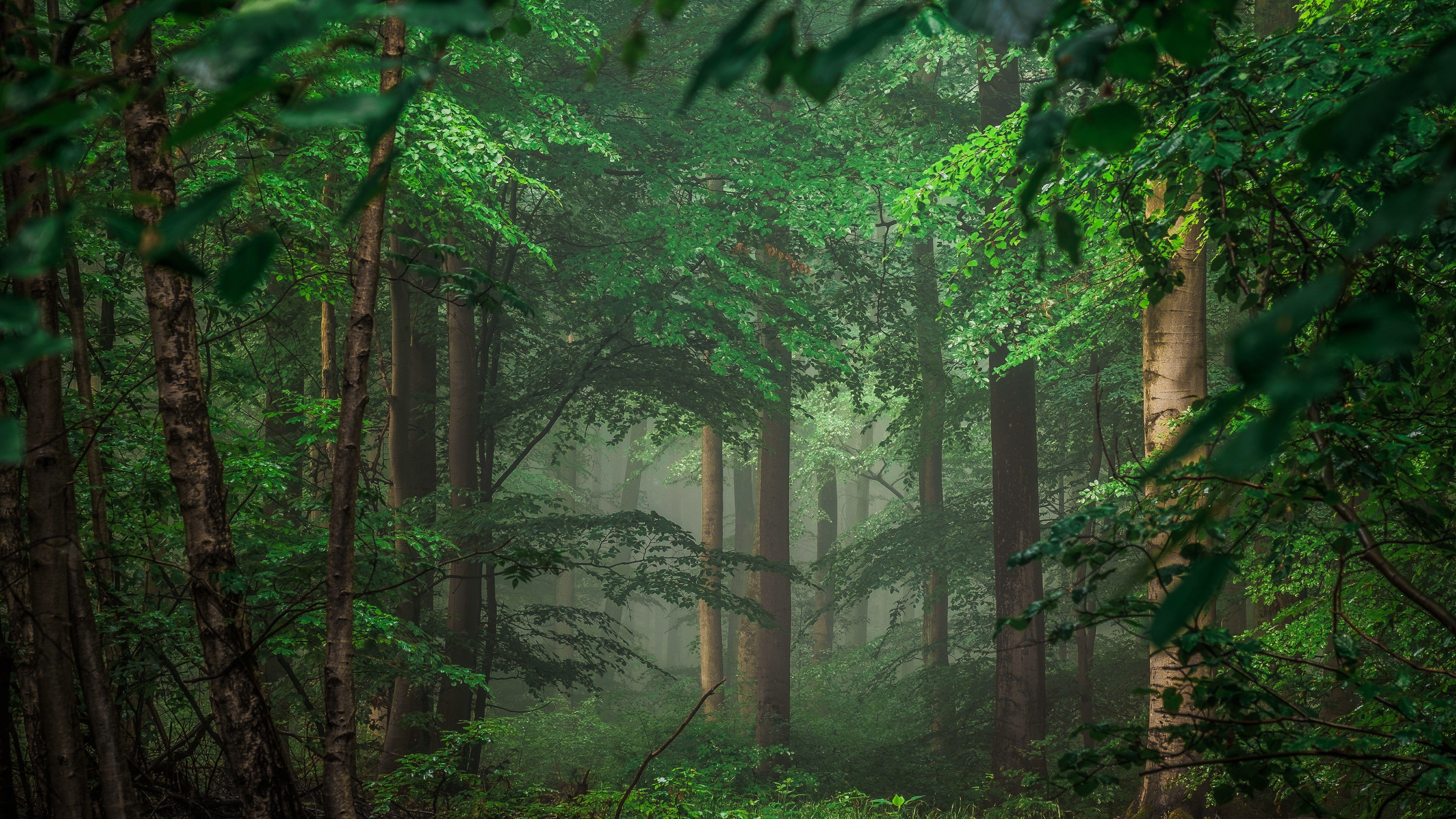 Vegetation Forest 8k Tree Green Leaves 8k Uhd Green Woodland