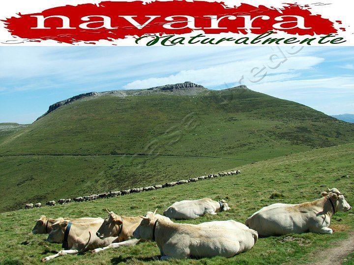 144 El Plan Turístico de Navarra  para el año 2013, debate, análisis y conclusiones al proyecto de Carlos Erce    https://www.facebook.com/notes/agroturismo-casa-rural-navarra-urbasa-urederra-centro-de-turismo-rural/144-el-plan-tur%C3%ADstico-de-navarra-naturalmente-para-el-a%C3%B1o-2013-debate-an%C3%A1lisis-y/10151112287172861  #TurismoNavarra  #TurismoRural  http://www.nacedero-riourederra.com  www.casaruralnavarra-urbasaurederra.com  http://estellalizarra-ciudadmedieval.blogspot.com.