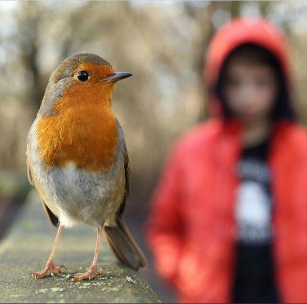 Rocky Robin